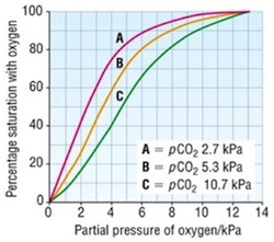 Partial Pressure Oxygen - Freedive Earth