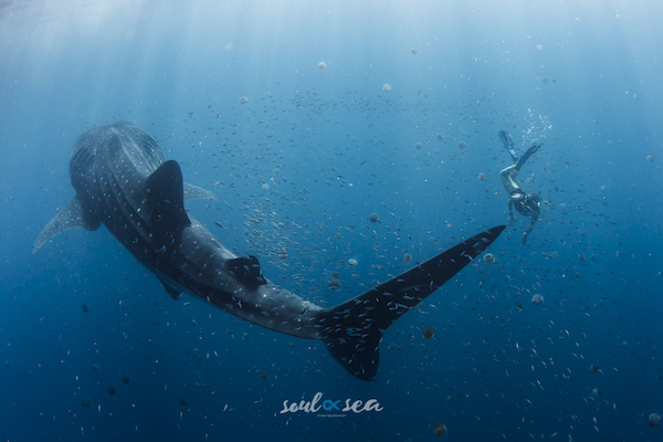 Sould and Sea Underwater photography
