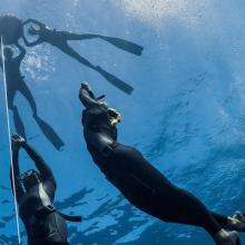 PAdi freediving Programm